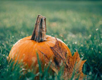 Pumpkin sitting on grass with fall leaf