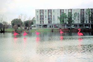 LSU lake with pink flamingos